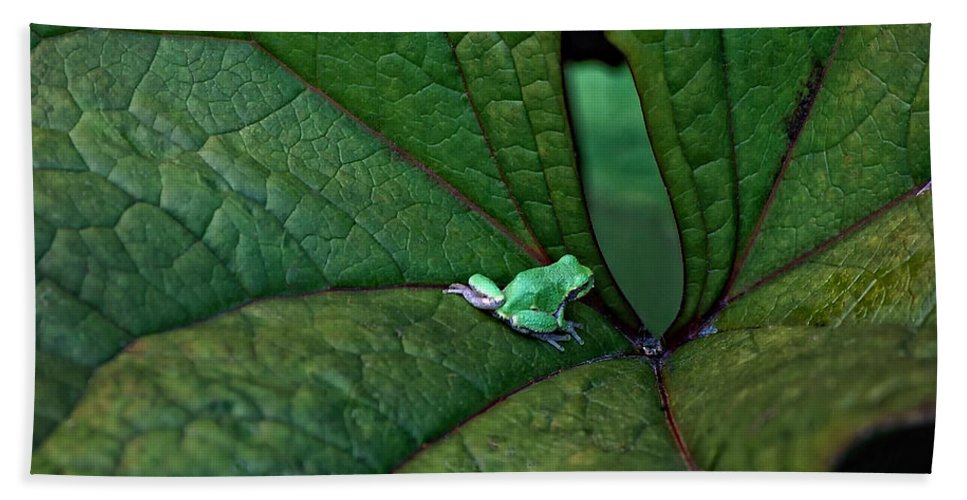 Leaf Hand Towel featuring the photograph In The Groove by Steve Harrington