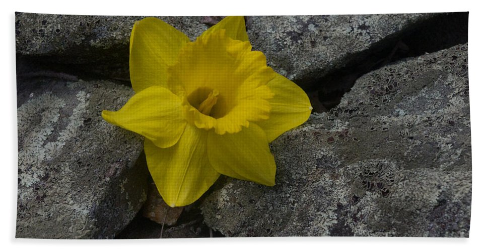 Daffodil Hand Towel featuring the photograph In The Rocks by Ray Konopaske