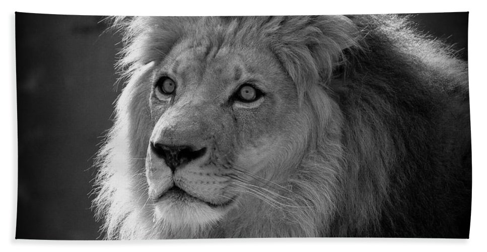 Lion Hand Towel featuring the photograph In The Shadows #2 by Lisa L Silva