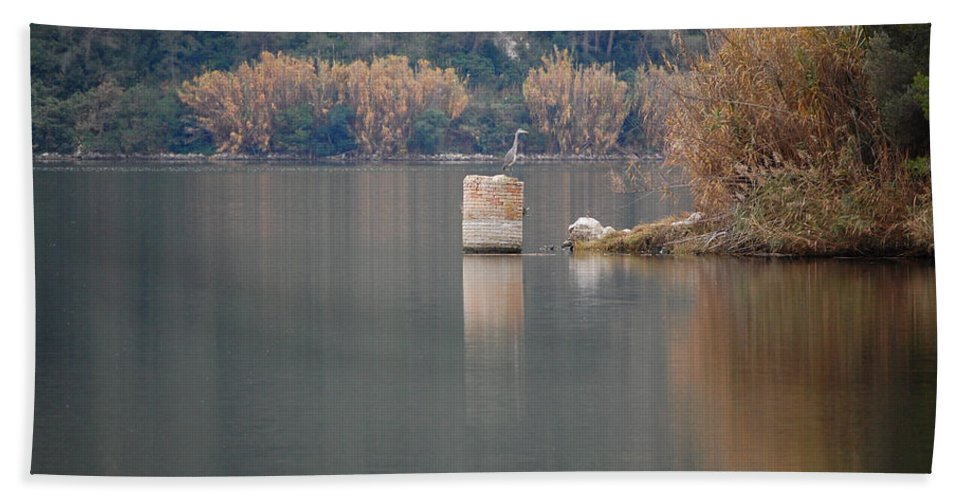 Swamp Hand Towel featuring the photograph In The Swamp by Gina Dsgn