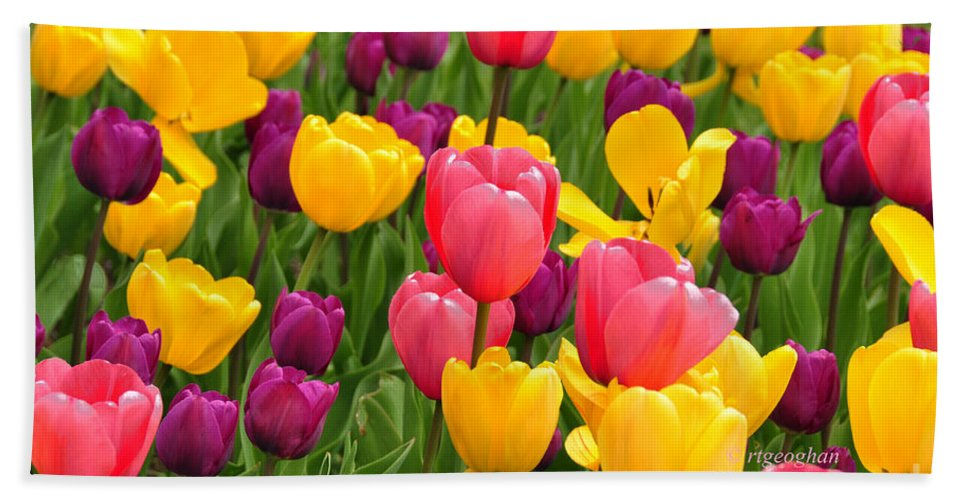 Tulips Hand Towel featuring the photograph In The Tulip Garden by Regina Geoghan