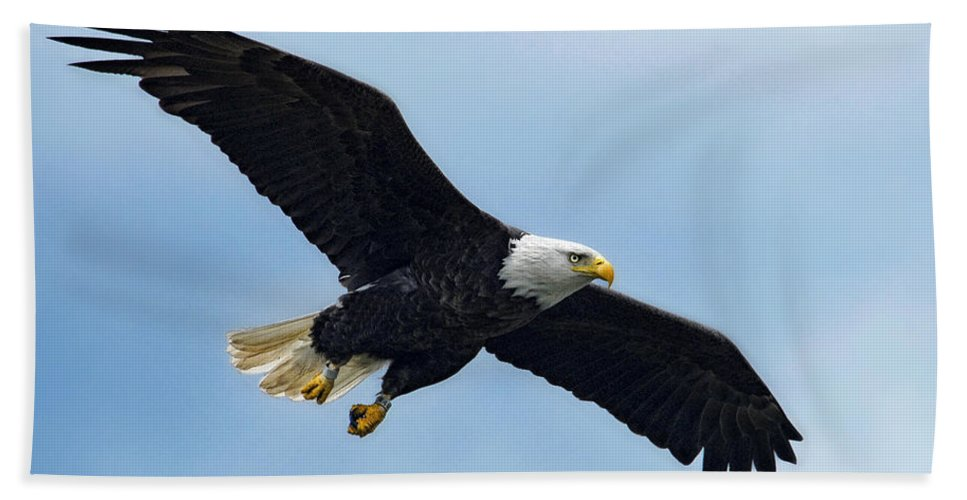 Eagle Hand Towel featuring the photograph Incoming by Claudia Kuhn