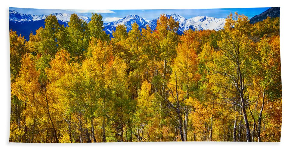 Snow Bath Sheet featuring the photograph Independence Pass Autumn Colors by James BO Insogna