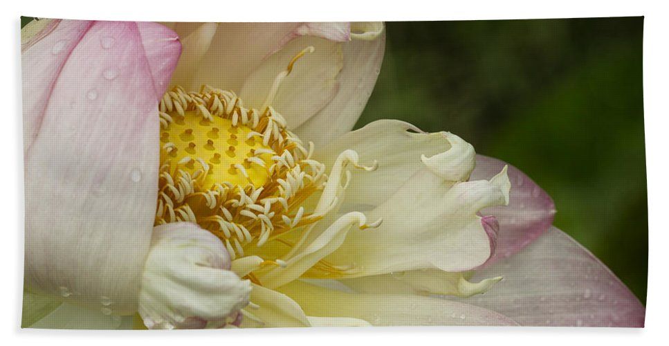Yellow Hand Towel featuring the photograph Inner Beauty Of The Lotus by Linda D Lester