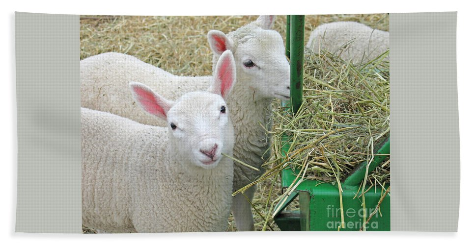 Lamb Hand Towel featuring the photograph Innocence by Ann Horn