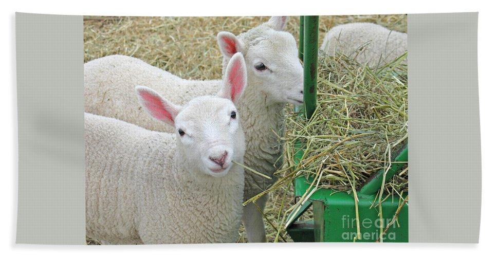 Lamb Bath Towel featuring the photograph Innocence by Ann Horn