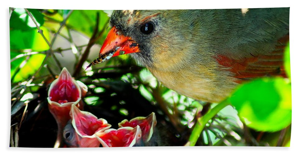 Cardinal Hand Towel featuring the photograph Insect For Diner Agaain by Frozen in Time Fine Art Photography