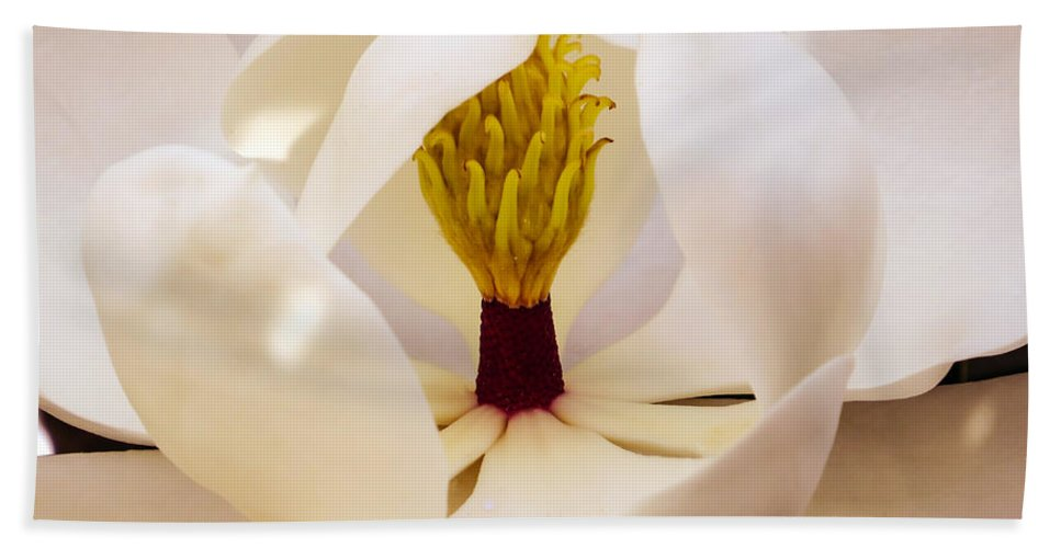 Magnolia Grandiflora Hand Towel featuring the photograph Inside The Magnolia by Zina Stromberg