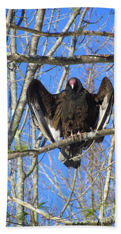 Turkey Vulture Hand Towel featuring the photograph Intimidating by Elizabeth Dow