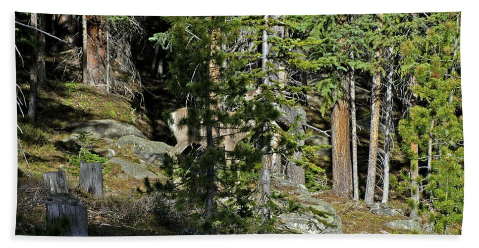 Wildlife Hand Towel featuring the photograph Invisible by Jeremy Rhoades