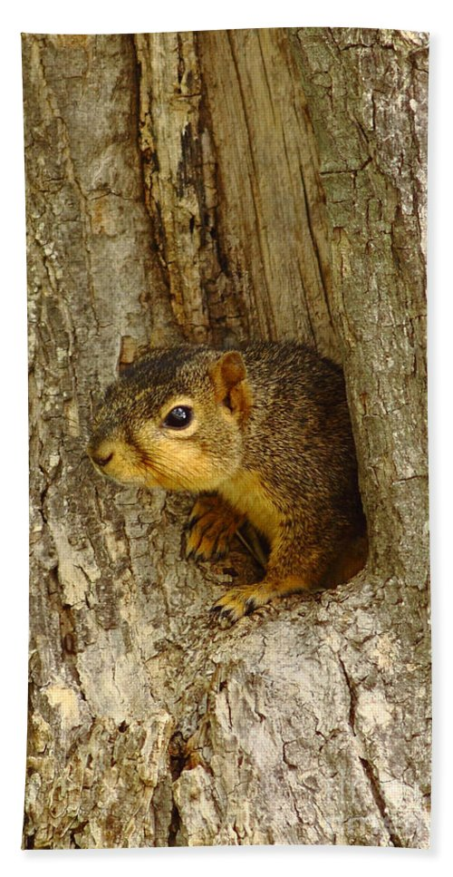Iphone Hand Towel featuring the photograph iPhone Squirrel In A Hole by Robert Frederick