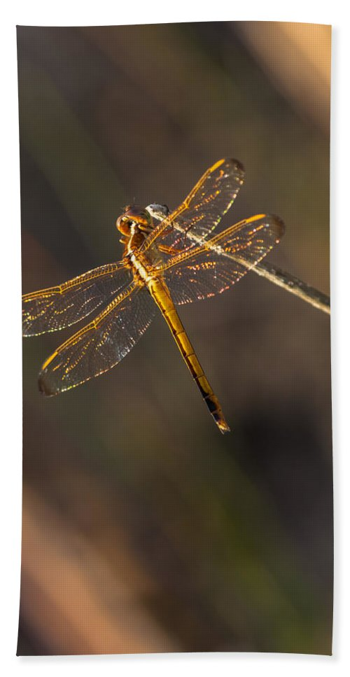Dragonfly Bath Sheet featuring the photograph Iridescent Dragonfly Wings by Ed Gleichman