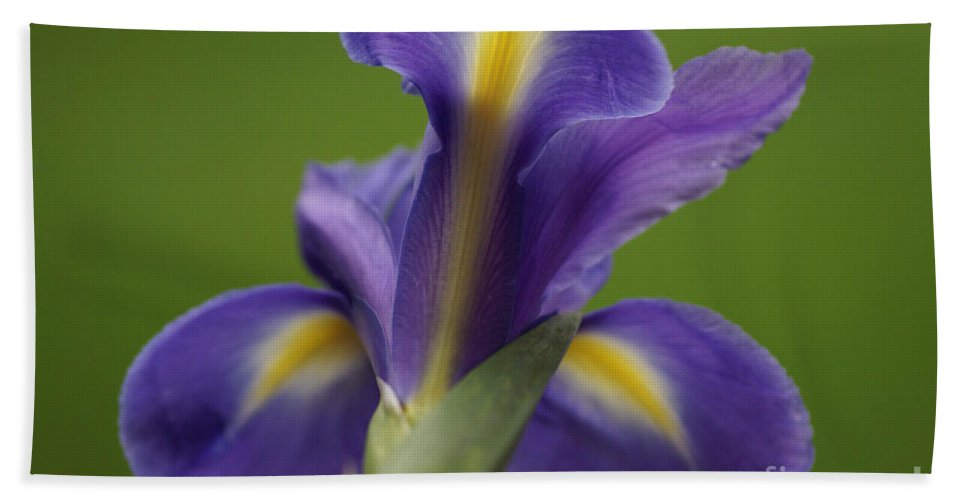 Purple Hand Towel featuring the photograph Iris 4 by Carol Lynch