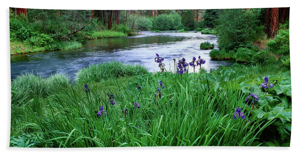 Photography Bath Towel featuring the photograph Iris Flowers By The Metolius River by Panoramic Images