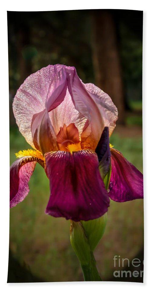 Flower Bath Sheet featuring the photograph Iris In The Spotlight by Robert Bales