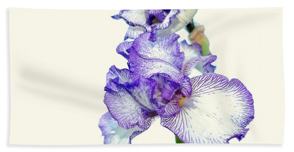 Iris Hand Towel featuring the photograph Iris by Todd Hostetter