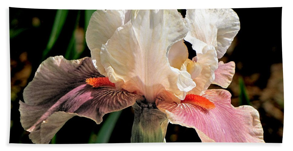 Iris Bath Sheet featuring the photograph Iris White To Pink by C H Apperson