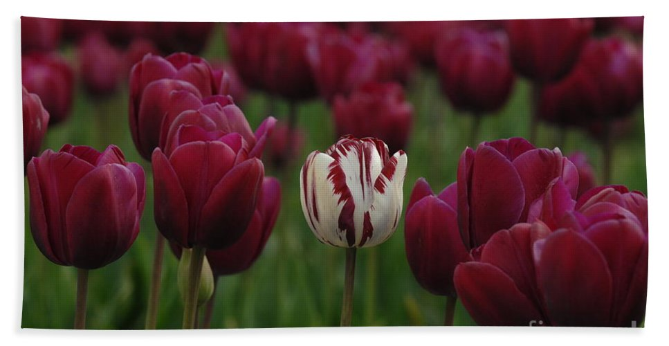 Tulips Bath Sheet featuring the photograph It Is Beautiful Being Different by Bob Christopher