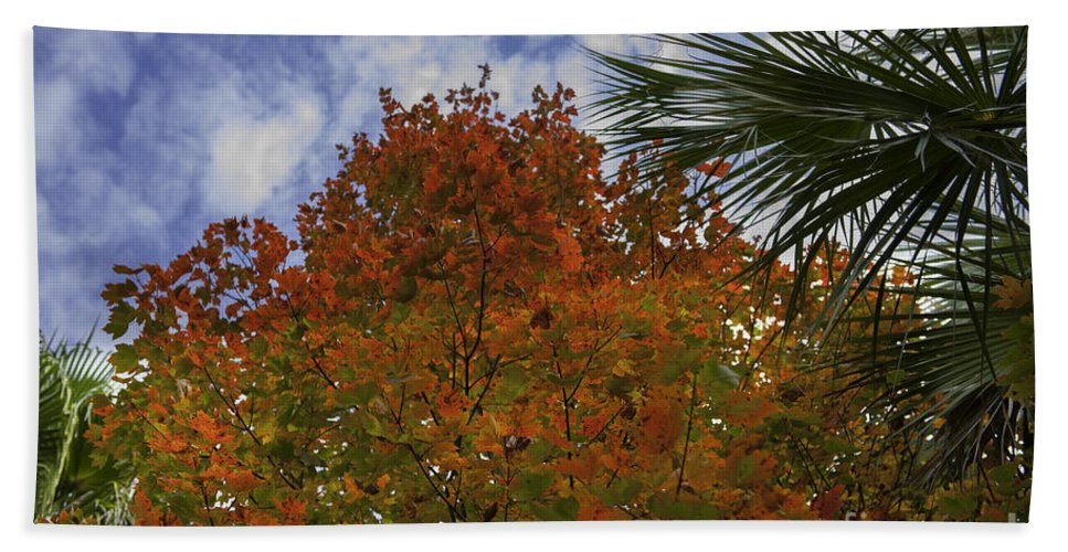 Maple Leaf Bath Sheet featuring the photograph It's Fall Ya'll by Dale Powell