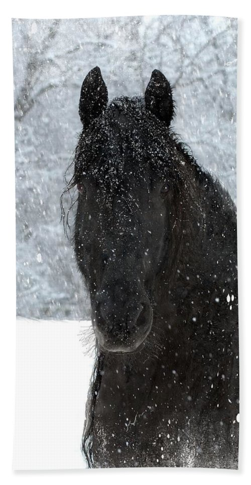 Friesian Horses Bath Towel featuring the photograph It's Friesian out here by Fran J Scott