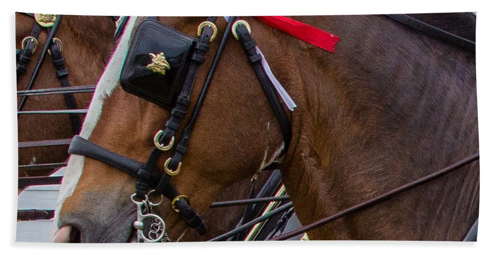 Budweiser Clydesdales Horses Bath Towel featuring the photograph It's Pretty Horse Day by Robert L Jackson