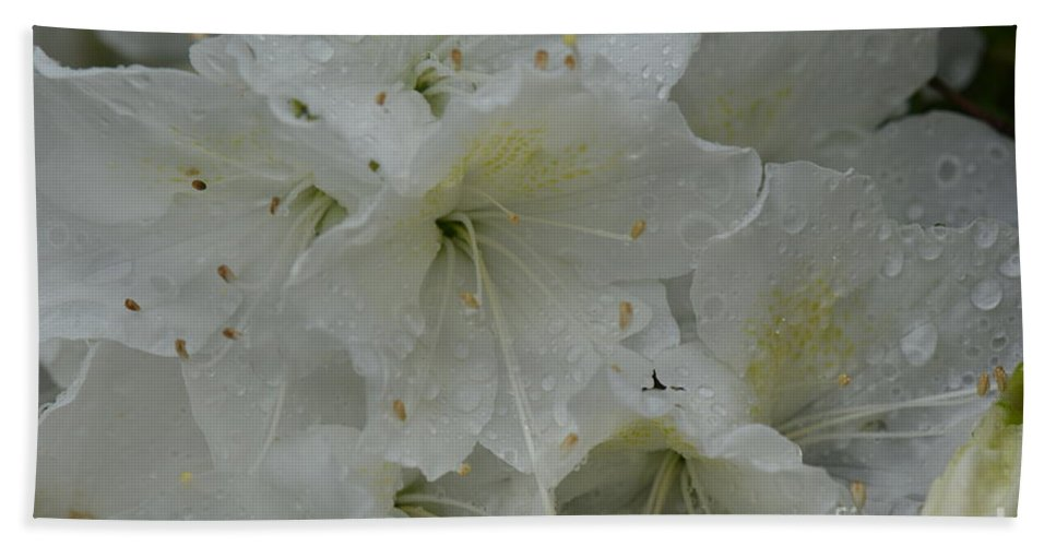Honey Hand Towel featuring the photograph Its Raining Azaleas Photo A by Barb Dalton