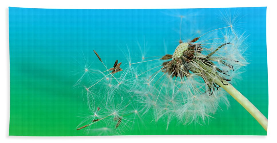 Drops Hand Towel featuring the photograph It's Summer by Heike Hultsch