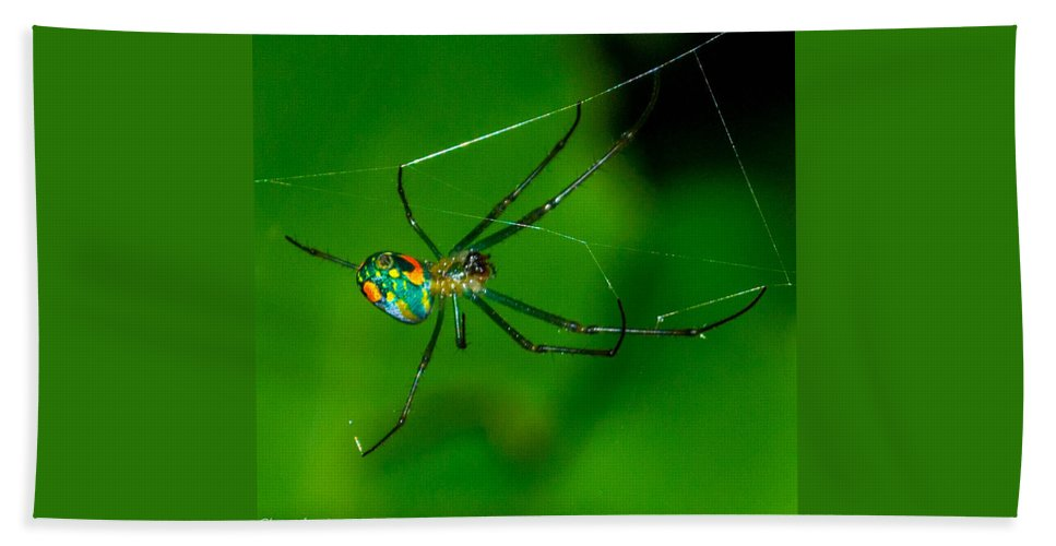 Spider Hand Towel featuring the photograph Itsy Bitsy 2 by Shannon Harrington