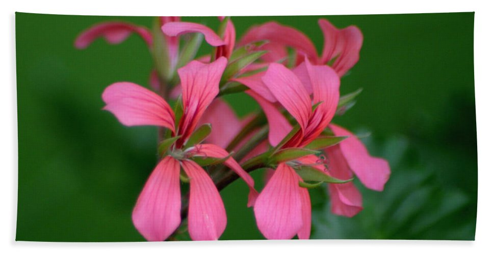 Ivy Geraniums Hand Towel featuring the photograph Ivy Geraniums by Living Color Photography Lorraine Lynch