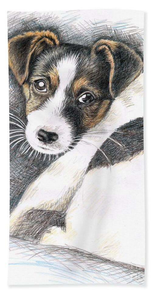 Dog Hand Towel featuring the drawing Jack Russell Puppy by Nicole Zeug
