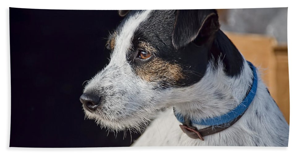 Jack-russell Hand Towel featuring the photograph Jack Russell Terrier by Susie Peek