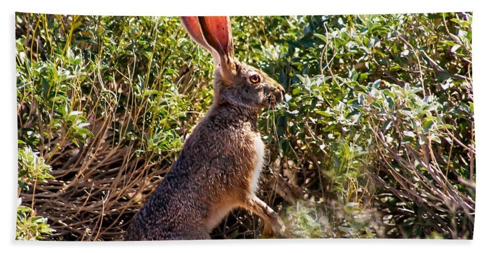 Hares Bath Sheet featuring the photograph Jackrabbit by Robert Bales