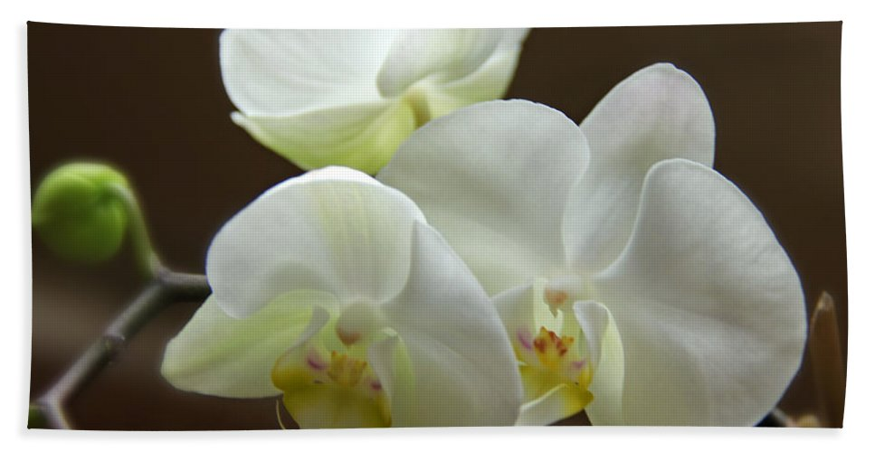 Colorado Bath Sheet featuring the photograph Jack's Orchids by Bob Hislop