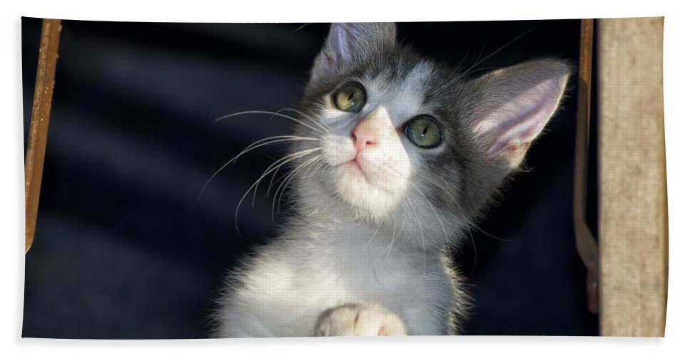 Cat Hand Towel featuring the photograph Jackson Is Always Inquisitive by Thomas Woolworth