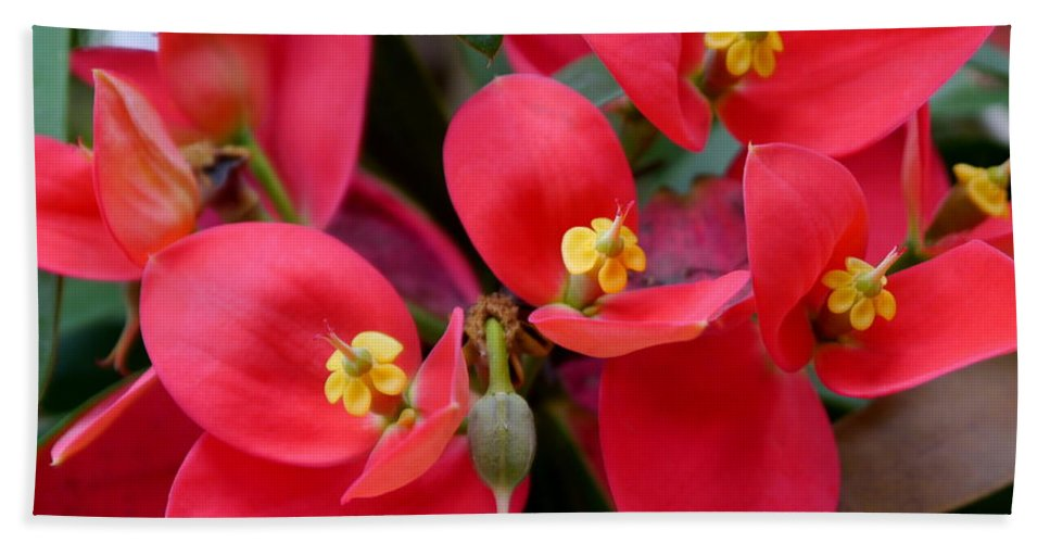 Flame Of Jamaica Bath Sheet featuring the photograph Jamaican Poinsettia by Christiane Schulze Art And Photography