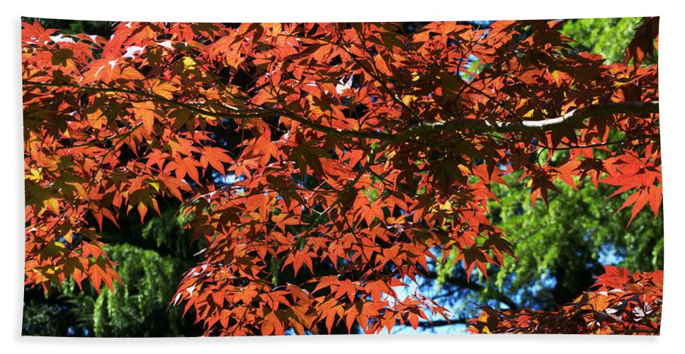Japanese Maple Bath Sheet featuring the photograph Japanese Maple Canopy by Chris Day