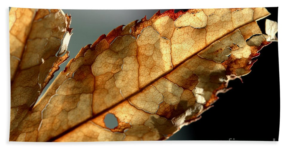 Brown Hand Towel featuring the photograph Japanese Maple Leaf Brown - 4 by Kenny Glotfelty