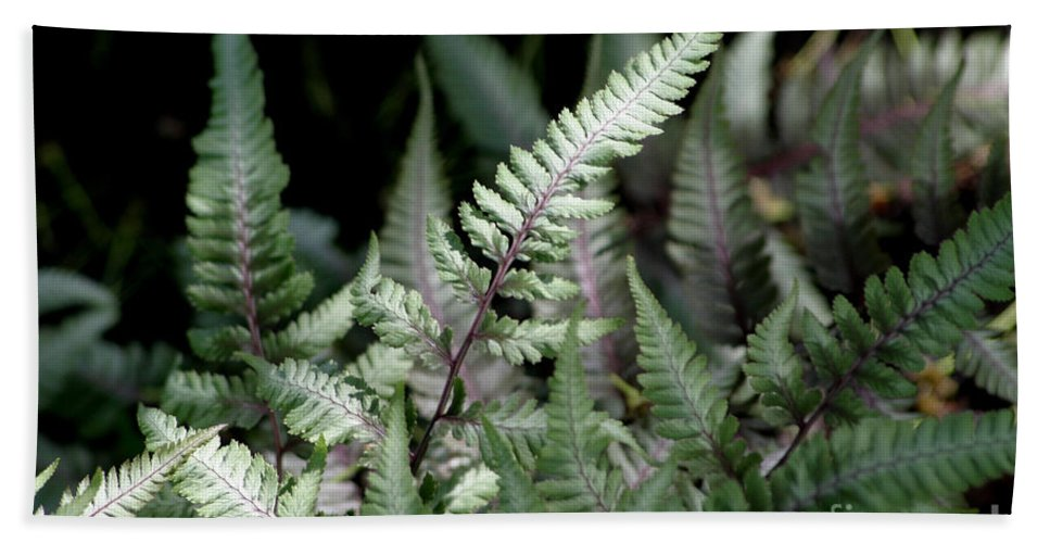 Japanese Painted Fern Hand Towel featuring the photograph Japanese Painted Fern by Living Color Photography Lorraine Lynch