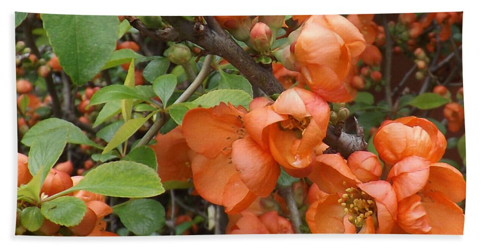 Shrub Bath Sheet featuring the photograph Japanese Quiche Blossoms by Brenda Brown