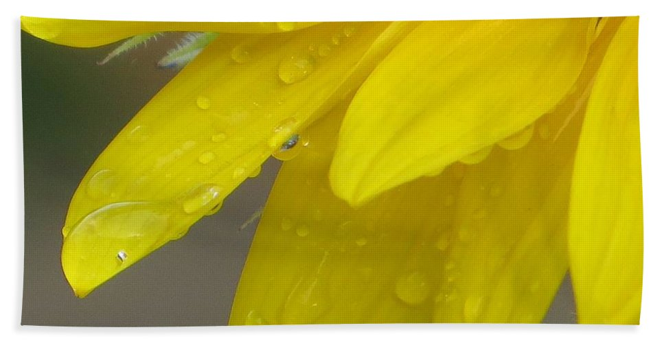 Golden Dew Hand Towel featuring the photograph Jaune Petals by Sonali Gangane