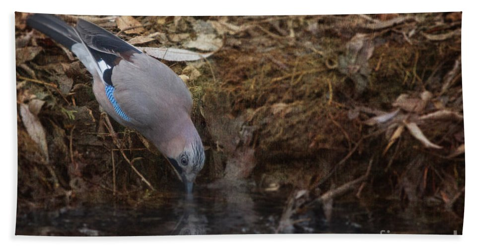 Eurasian Jay Hand Towel featuring the photograph Jay Drinking Water by Jivko Nakev