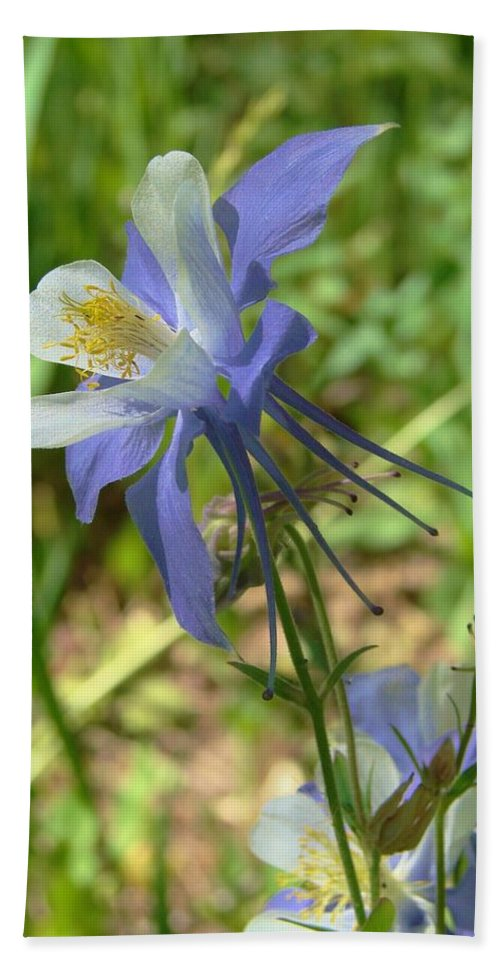 Columbine Hand Towel featuring the photograph Jewel In The Glade 2 by Margaret Bobb