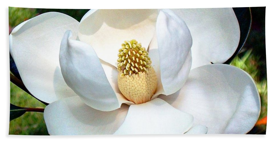 Flower Hand Towel featuring the photograph John's Magnolia by Barbara Chichester