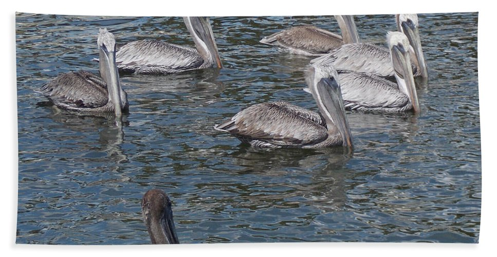 Pelican Bath Sheet featuring the photograph Join The Parade by To-Tam Gerwe