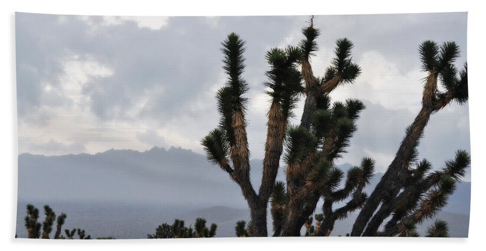 Joshua Tree Hand Towel featuring the photograph Joshua Tree Forest Ivanpah Valley by Kyle Hanson