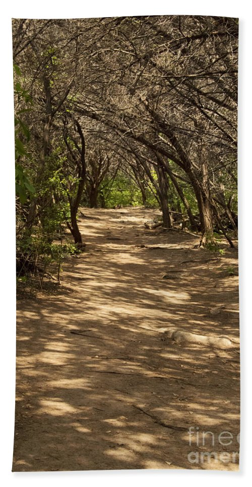 Turkey Creek Trail Trails Creeks Parks Emma Long Metropolitan Park Austin Texas Cedar Tree Trees Landscape Landscapes Hand Towel featuring the photograph Journey Through The Cedars by Bob Phillips