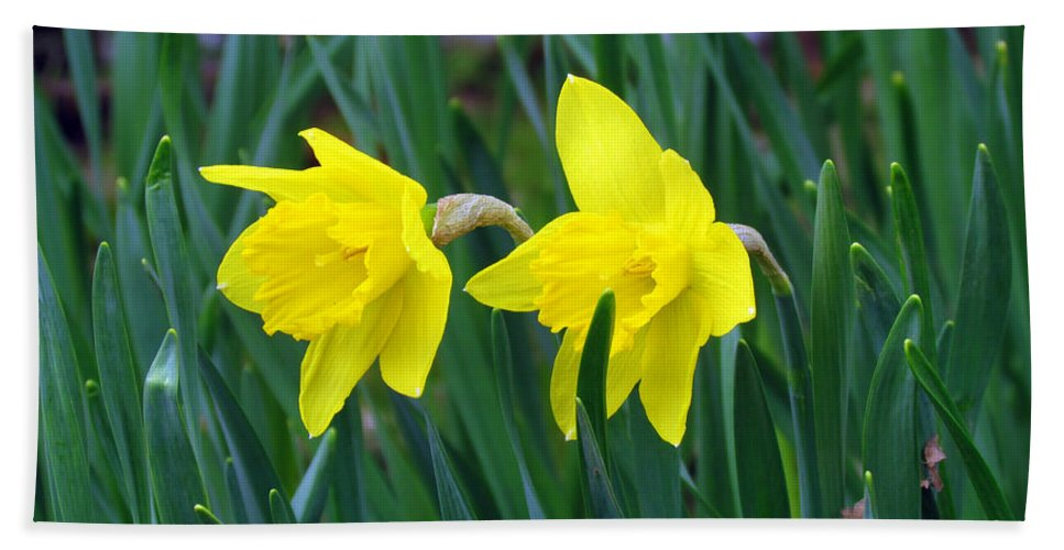 Jonquil Bath Sheet featuring the photograph Jovial Jonquils by Elizabeth Dow
