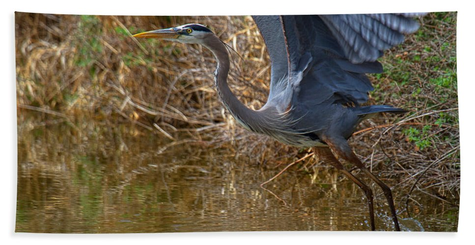 Blue Heron Photograph Bath Sheet featuring the photograph Jump Start by Jim Garrison