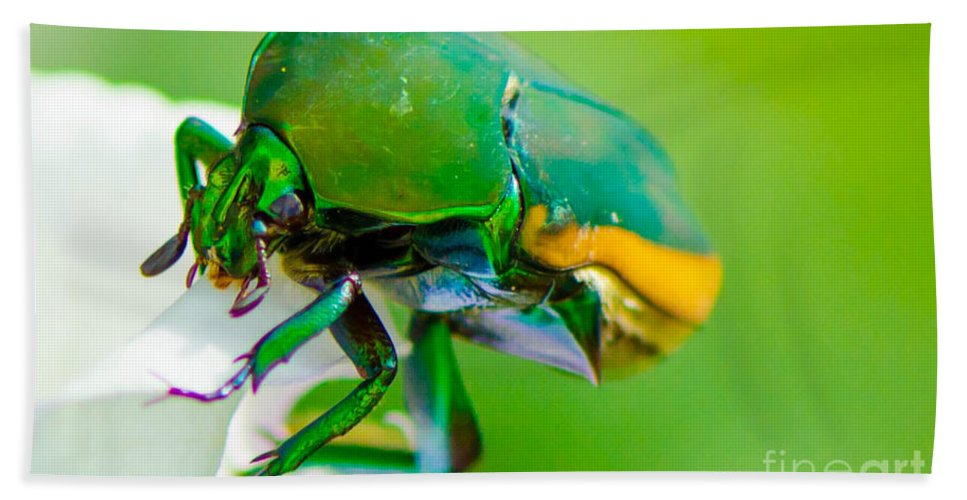 June Bath Sheet featuring the photograph June Bug Fig Beetle by Michael Moriarty