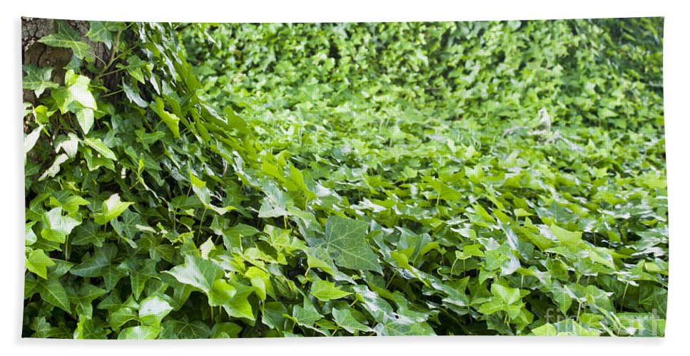 Bright Green Bath Sheet featuring the photograph Jungle Vines by Tim Hester